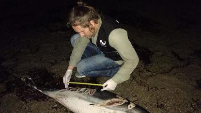 Dolfijn met naam ingekerfd, spoelt aan op strand