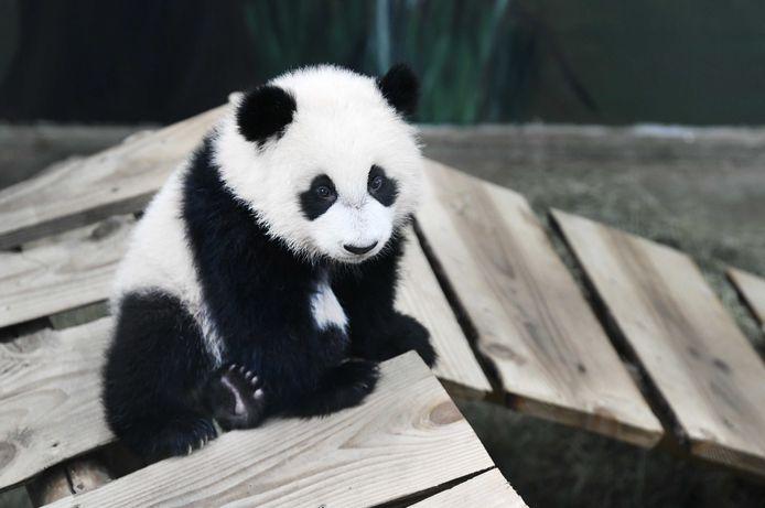 Fan Xing.