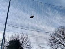 Verwaaide paraplu in netten bij voetbalvelden blijkt nijlgans