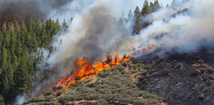 Op het Canarische eiland, Gran Canaria, wordt is een grote brand uitgebroken