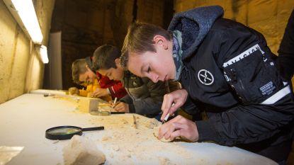 """Kinderen zoeken fossielen van zeeëgels in mergelgroeve Avergat: """"Ik voel me net een archeoloog"""""""