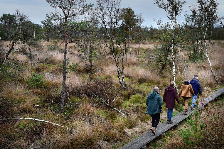De stikstofuitstoot is een belangrijke oorzaak van de achteruitgang van verschillende Natura 2000-gebieden zoals de Wooldse Veen.  Beeld Marcel van den Bergh / de Volkskrant