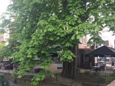 Mini-bos als goedmaker voor gekapte kastanje in Boxtel
