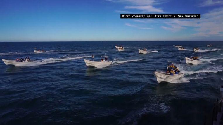 Ruim twintig vissersbootjes omsingelen het schip.