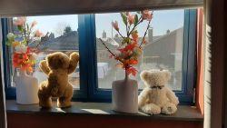 Daar zijn de beren! Oproep rond 'berenjacht' om dat blokje rond met de kindjes op te leuken, krijgt veel respons achter de Vlaamse ramen