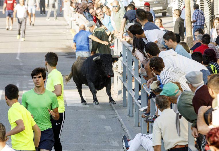 Beeld van het stierenrennen vandaag in Cuéllar.