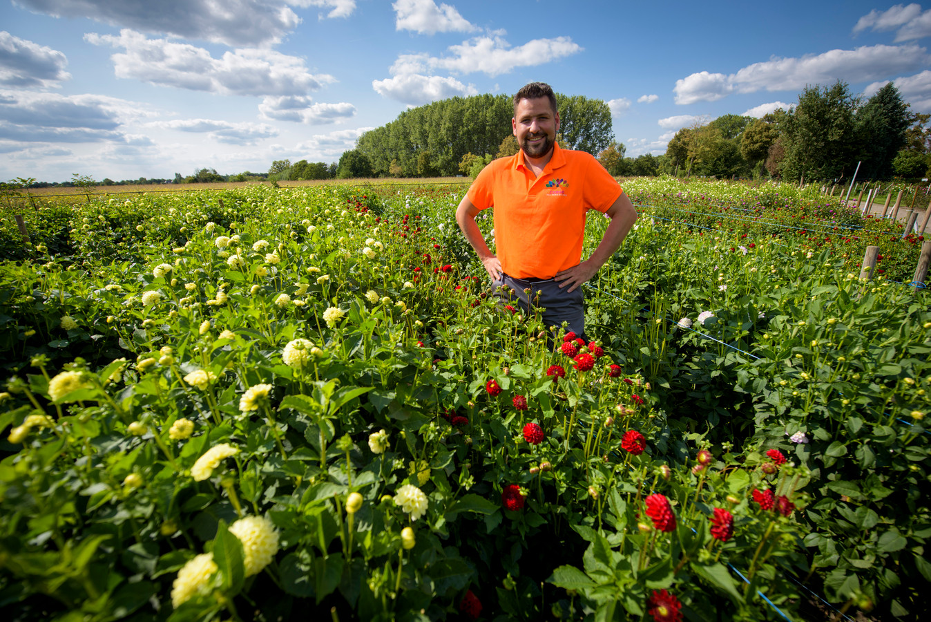 Jasper van Velthoven, voorzitter van de bloemencommissie van de stichting Bloemencorso, tussen de dahlia's.