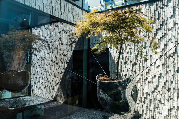 Voor de binnentuin werd Carlo Bogaerts die meer dan twee miljoen investeerde in het stadshotel Beila geïnspireerd door een appelsienenboom uit Israël.