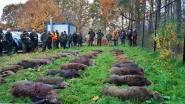 39 everzwijnen geschoten aan De Teut
