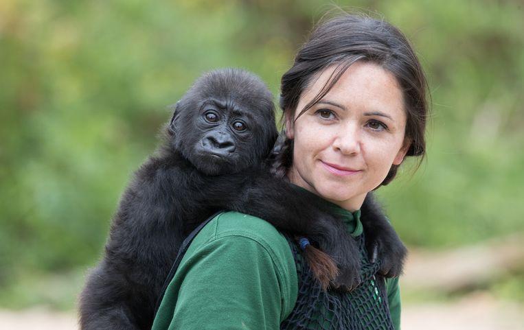 Babygorilla Afia en haar oppasser in de dierentuin van Bristol. Beeld Getty