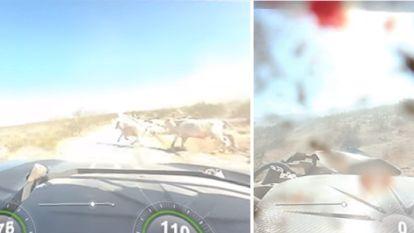 """Schokkende beelden: raceauto ramt aan rotvaart twee onverwachte gasten: """"We zagen overal bloed en ingewanden"""""""