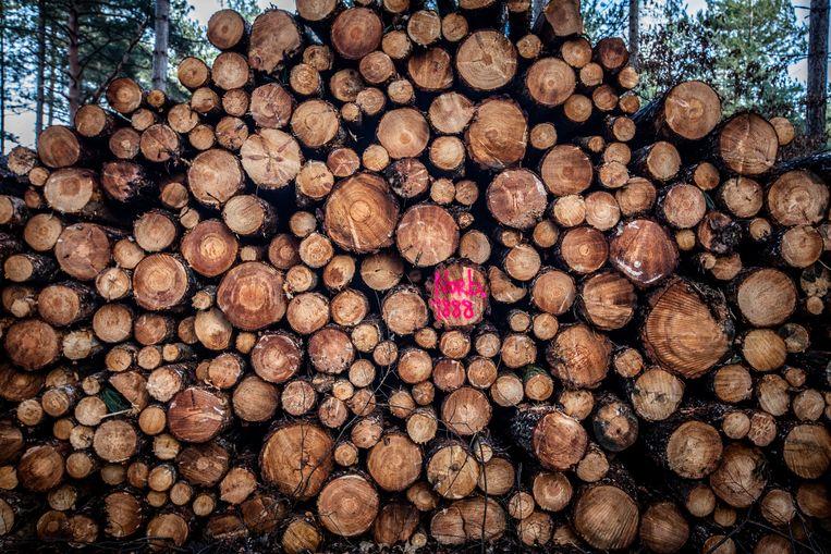 Illustratiebeeld van ontbossing.