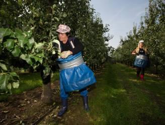 Coronareglement voor Limburgse seizoenarbeiders verlengd tot eind november