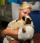 Het ernstig gewonde mopshondje Lola herstelt langzaam van haar verwondingen. Inmiddels is het baasje van het beestje gevonden.