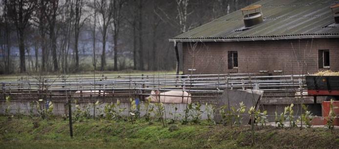 Archieffoto van de bioboerderij in Zeeland.