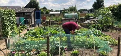 Plan voor spoedzoekers houdt buurt in Veghel bezig, maar in de moestuin is het een oase van rust