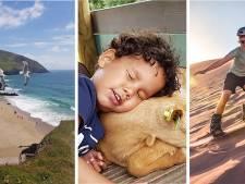 Van meeuwen tot zandboarden: Dit zijn de zonnigste zomerfoto's van deze week
