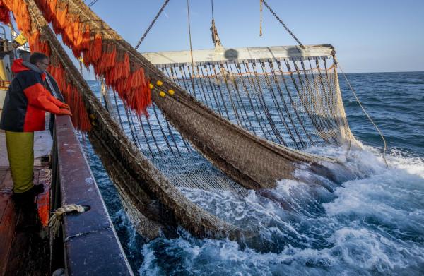 **Spanningen tussen pulsvissers en kustvissers over vangst in ondiep water**