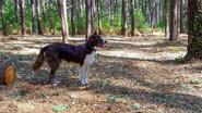 Hondenlosloopbos Parkheide geopend