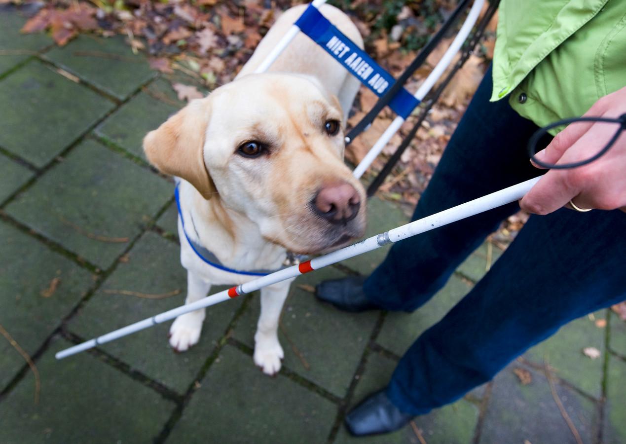 Een blindengeleidehond, foto ter illustratie.