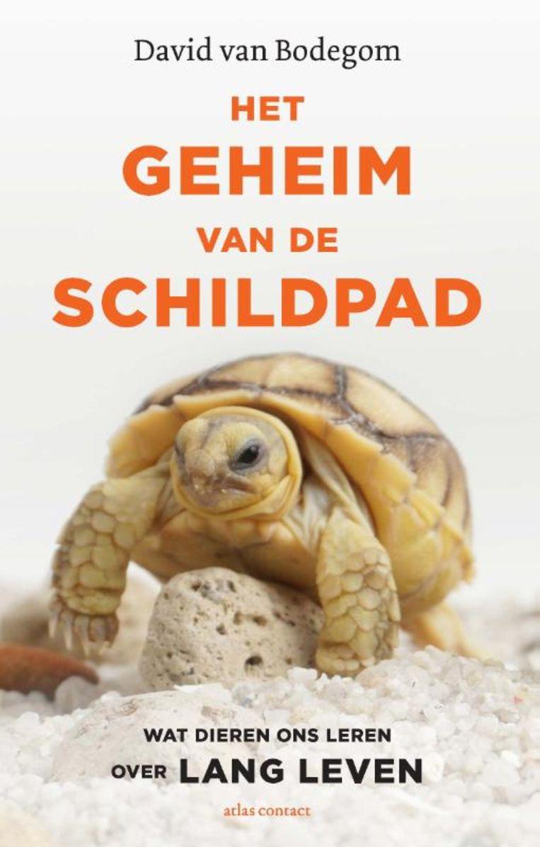 Het geheim van de schildpad. Beeld Atlas Contact