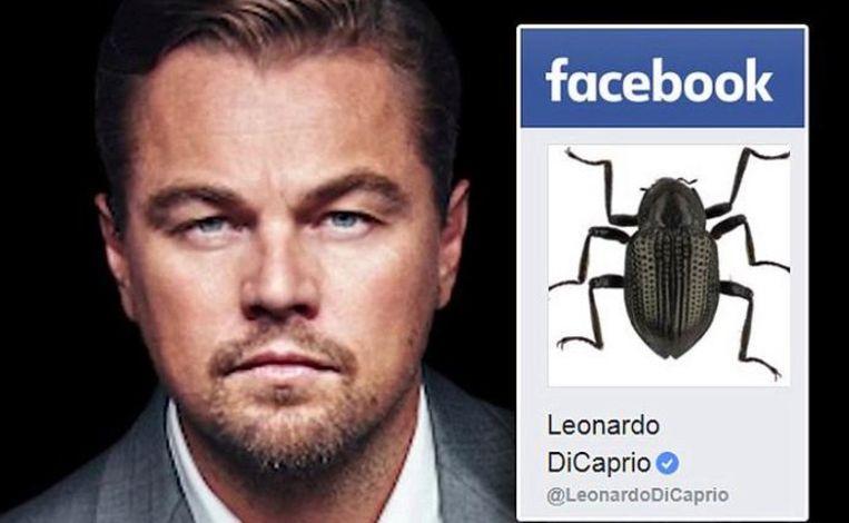 Nieuwe soort waterkever vernoemd naar Leonardo DiCaprio.