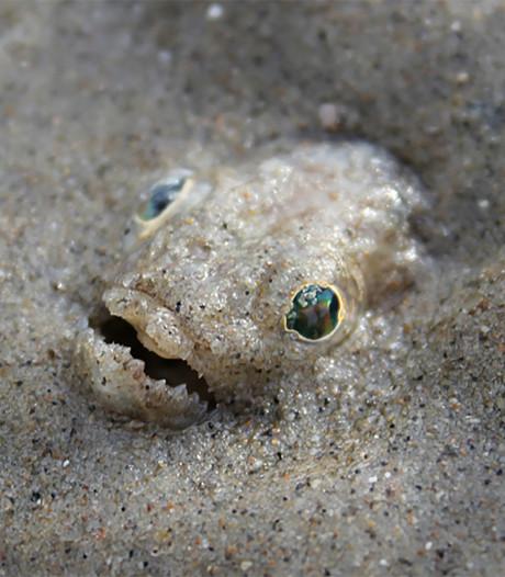 Giftig visje slaat toe op strand langs de Noordzee,  vrouw met spoed naar ziekenhuis