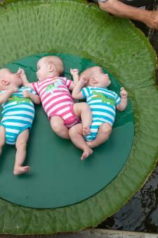 Victoria Amazonica in Diergaarde Blijdorp te zwak om baby's te dragen