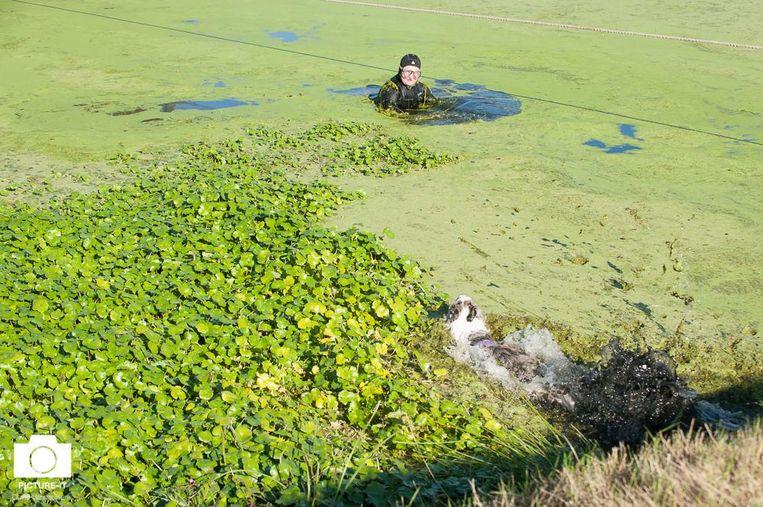 Een beeld van de hondenzwemming van vorig jaar. De hond tracht zijn baasje te bereiken.