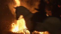 Waardevolle traditie of mishandeling? Paarden rijden door vuur tijdens Spaans festival