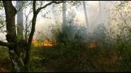 VIDEO. Bosbrand snel onder controle