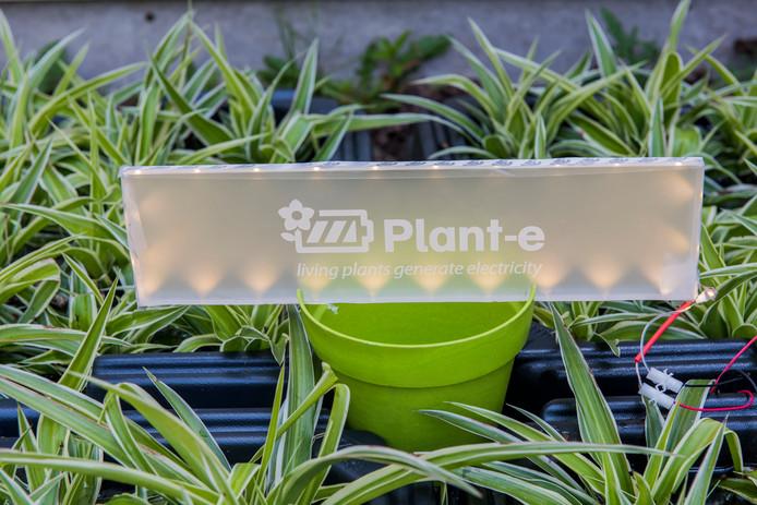Plant-e uit Wageningen wint energie uit planten
