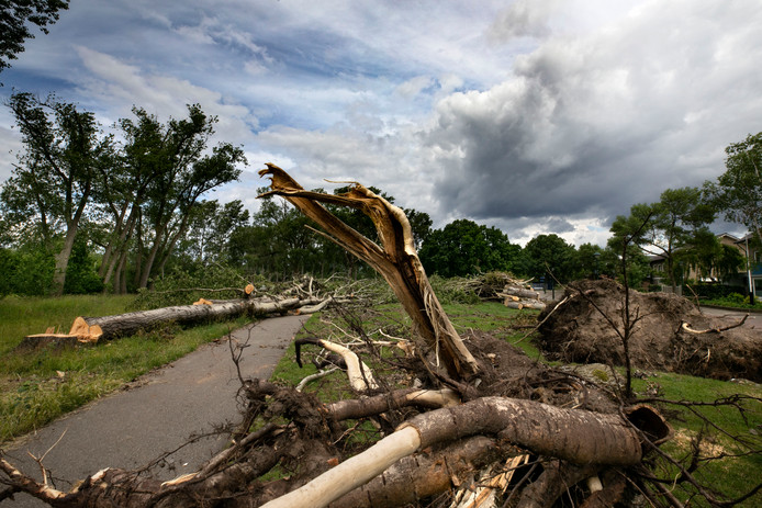 Juni: Stormschade in de Genneperparken in Eindhoven.