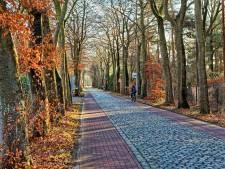 Raad ruziet over bomenkap aan laantje Molenschot