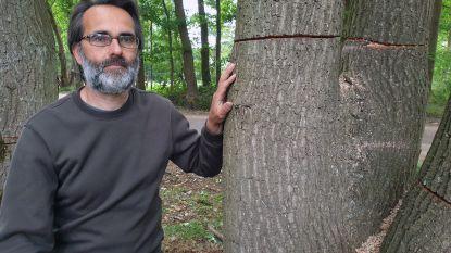 """Maand na zware brand beschadigt onverlaat 117 eikenbomen rond bezoekerscentrum De Liereman: """"Vandaal wist precies hoe diep hij moest zagen om bomen te doen sterven"""""""