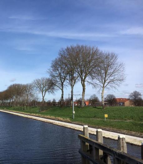 Opnieuw gaan abelen langs het Kanaal door Walcheren tegen de vlakte