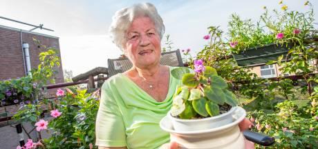 Dit Kaaps viooltje bloeit al 19 jaar. 'Het hart van Dick tikt erin door'