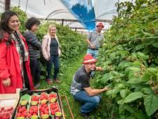 Framboos en rode bes winnen aan populariteit, zo blijkt op open dag in Dodewaard