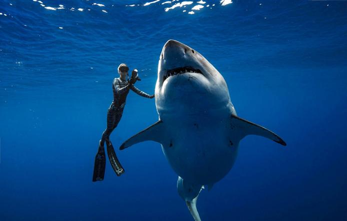 Ocean Ramsey zwemt naast de grootste haai ter wereld. En ze leeft nog steeds.