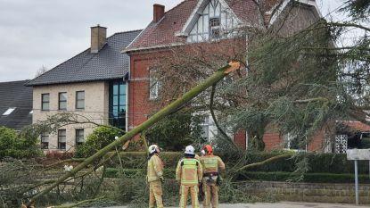Storm Ciara raast over Lierde: Spar afgeknakt en dakpannen losgerukt
