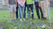 Verheyenplein krijgt facelift voor bloemenmarkt