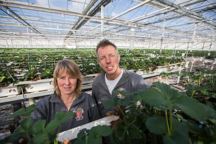 Monique en Richard van Dijk waagden de overstap van de rozen naar de aarbeien en hebben totaal geen spijt.