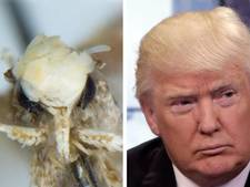 Mot met potsierlijk kapsel vernoemd naar Donald Trump