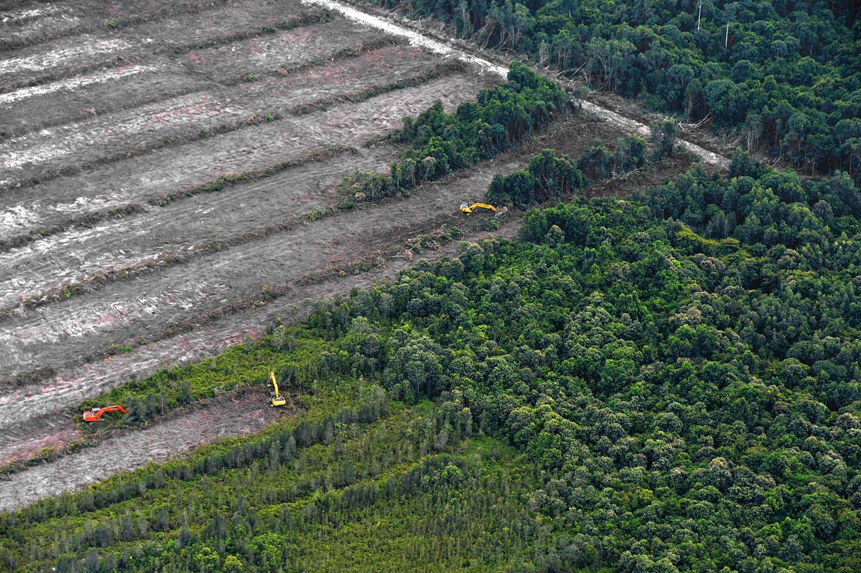 Een palmolieplantage wordt aangelegd op Borneo, Indonesië. (2014)