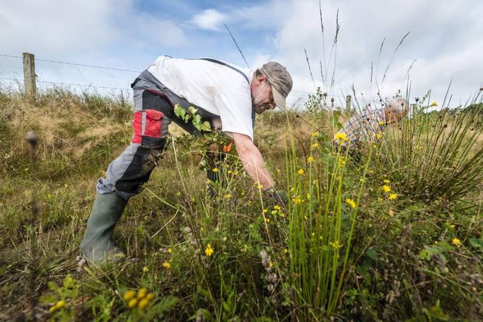 Natuurwerkgroep Rucphen onderhouden de natuur bij 't Gaegelpad. foto Tonny Presser/Pix4Profs