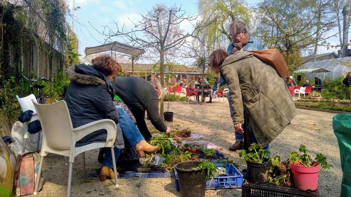 Bezoekers van de plantenruilmarkt konden kiezen uit honderden planten en stekjes.
