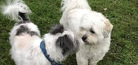 Hondje van Lia in Waalre beschoten: 'Hij heeft geluk gehad'