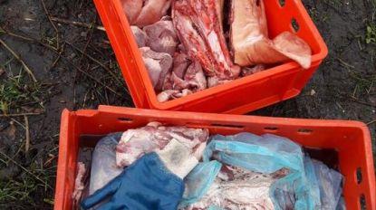 Slachtafval en varkenskoppen gedumpt in Denderleeuw