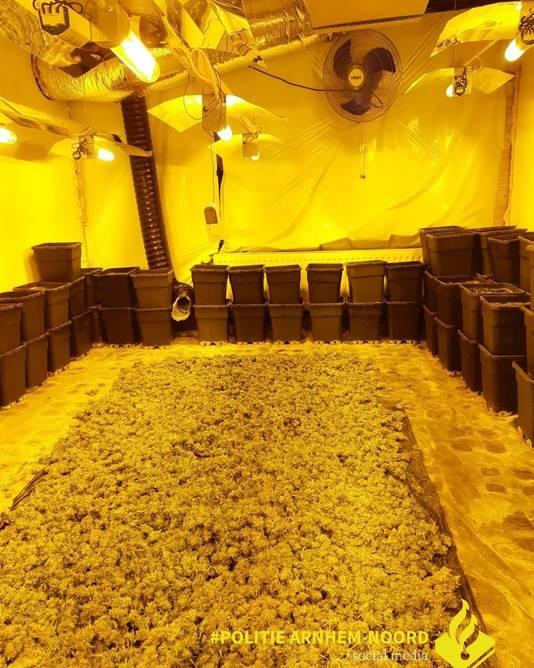 Er kwam een flinke wietlucht uit een appartement in de Steenstraat in Arnhem. Agenten ontdekten na een tip deze kwekerij.