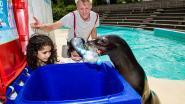 Zeeleeuwen leren bezoekers Seapark sorteren